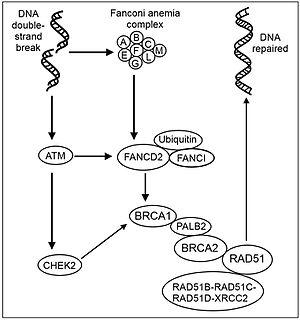 Database Process Flow Diagram Process Workflow Diagram