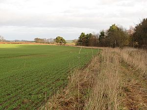 English: Unplanted strip Winter crop with an u...