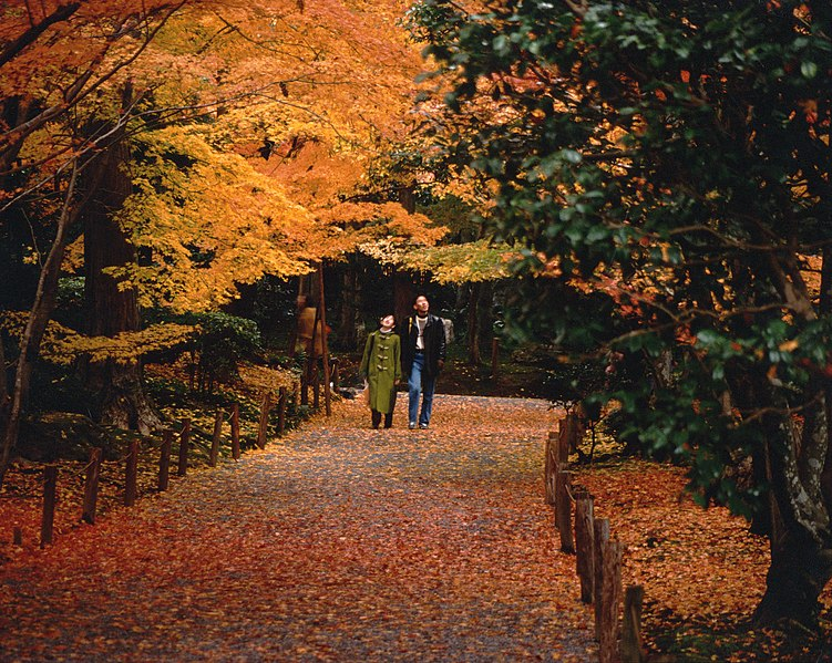 Walk amid Momiji in Kyoto, Ryoan-Ji