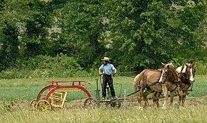 English: Amish raking hay in southeast Ohio.