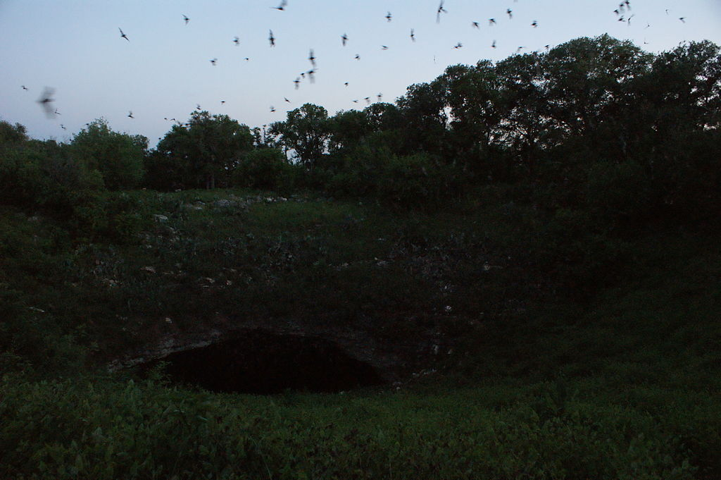 Bracken Cave bats emerging from the cave