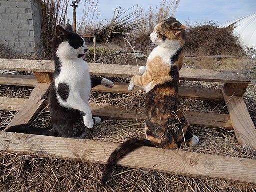 Catch cats 3