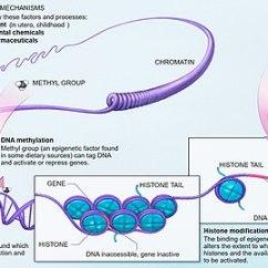 Architectural Program Diagram And 2 Electrolux Fridge Wiring Epigenetics - Wikipedia