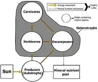 savanna animal food chain diagram usb type b wiring rete alimentare - wikipedia