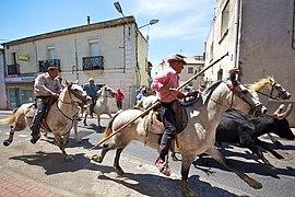 Equitacin De Trabajo Wikipedia La Enciclopedia Libre