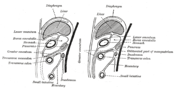 Diagrams to illustrate the development of the ...