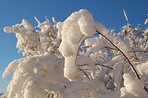 Snow in sweden