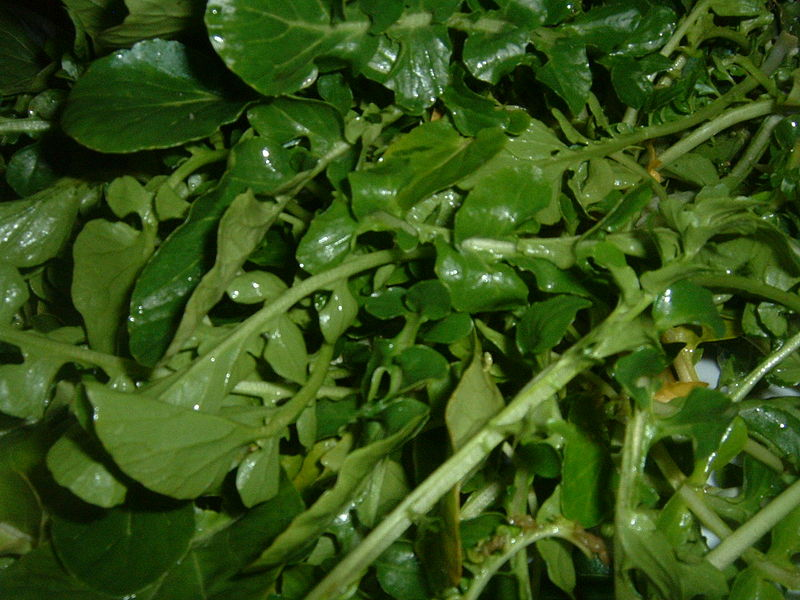 File:Watercress (2).JPG