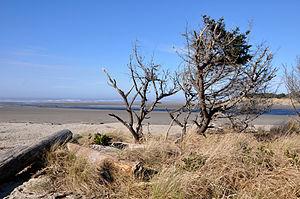 English: Pacific Ocean beach at Ona Beach Stat...