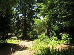 San Mateo Arboretum, San Mateo, CA - IMG 9082.JPG