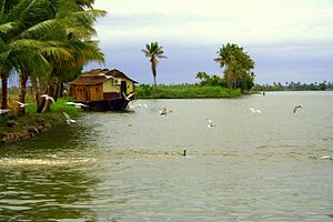 Kerala Backwaters View