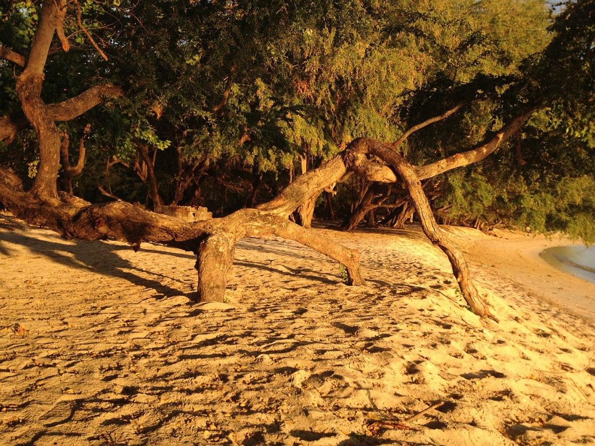 Magalawa Beach