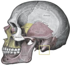 """Résultat de recherche d'images pour """"mastoïde anatomie"""""""