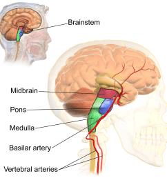 vascular diagram of neck [ 1200 x 1200 Pixel ]