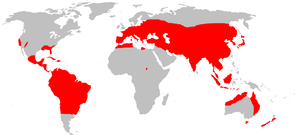 distribution of the wild boar