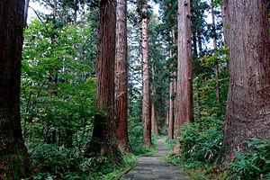 Ideha jinja pathway 日本語: 出羽神社 参道