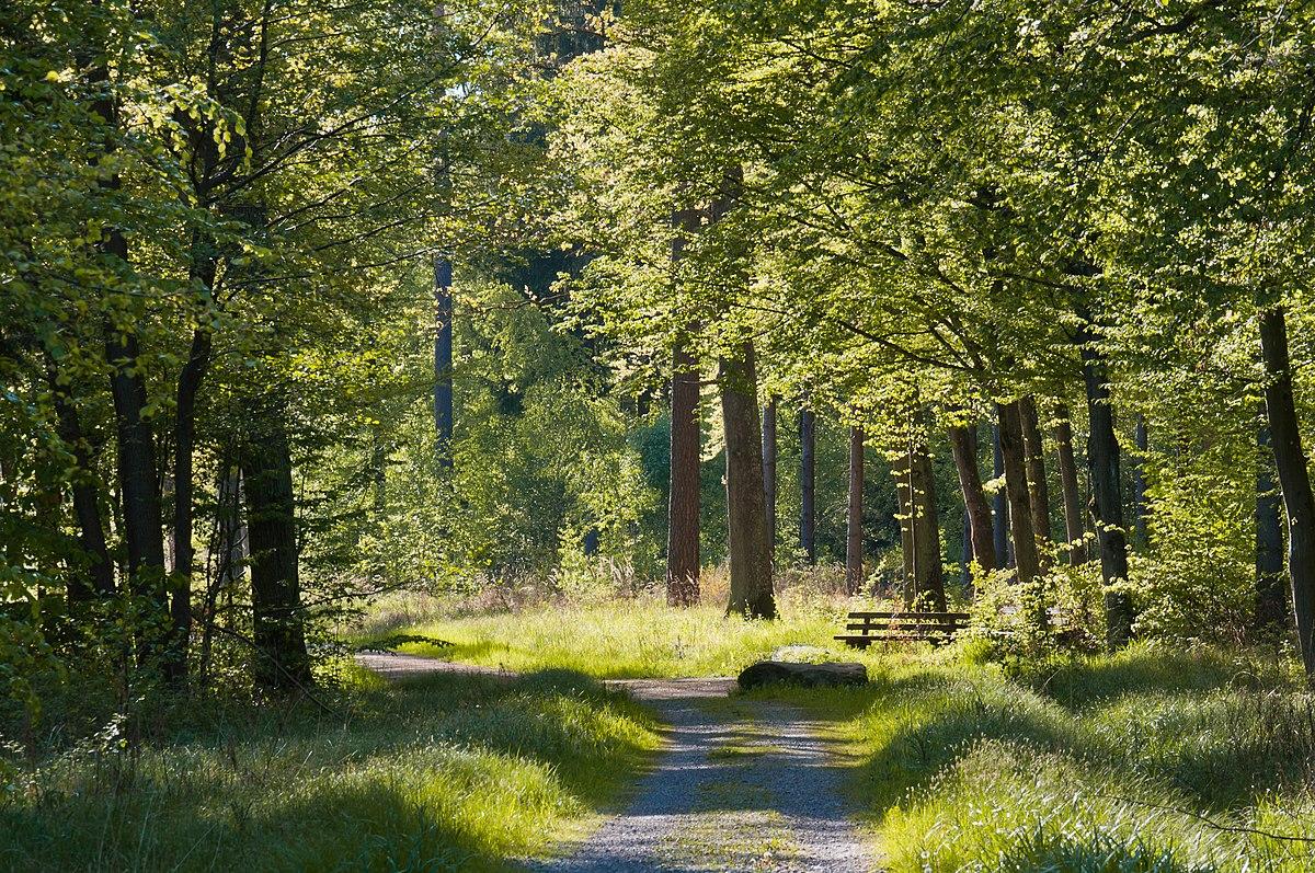 Rotwildpark bei Stuttgart  Wikipedia