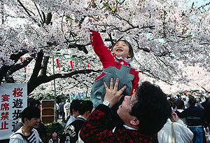 Hanami celebrations under the cherry blossoms ...