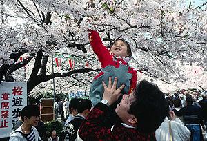Hanami celebrations under the cherry blossoms ...
