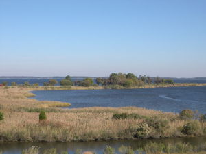 Tidal wetlands of Chesapeake Bay, Maryland, USA.