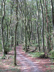 Der Hermannsweg auf der Steinegge bei Dissen