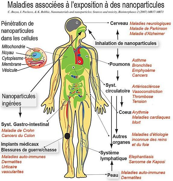 Fichier:NanoparticleNanoparticules pictureFr.jpg