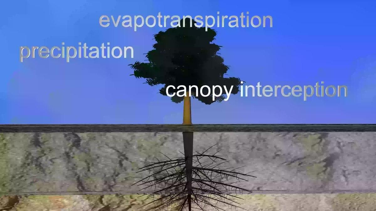 Throughflow  Wikipedia