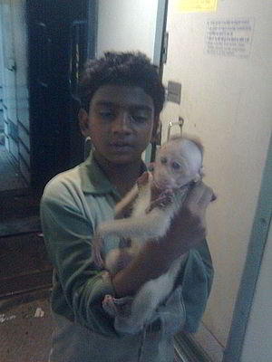 English: A pre-teen Indian boy showing a baby ...