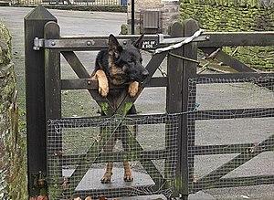 Beware of the poseur Guard dog at Bull Hill Fa...