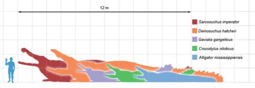 File:Crocodilians scale.png