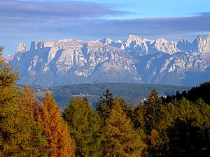 Larix decidua forest, Dolomites, San Genesio A...