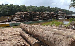 Madeira de desmatamento na Amazônia
