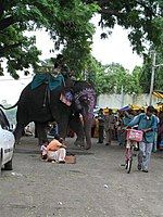 Un elefante en Ujjain.