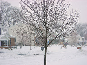 An ice covered tree in Harrisburg, Pennsylvania.