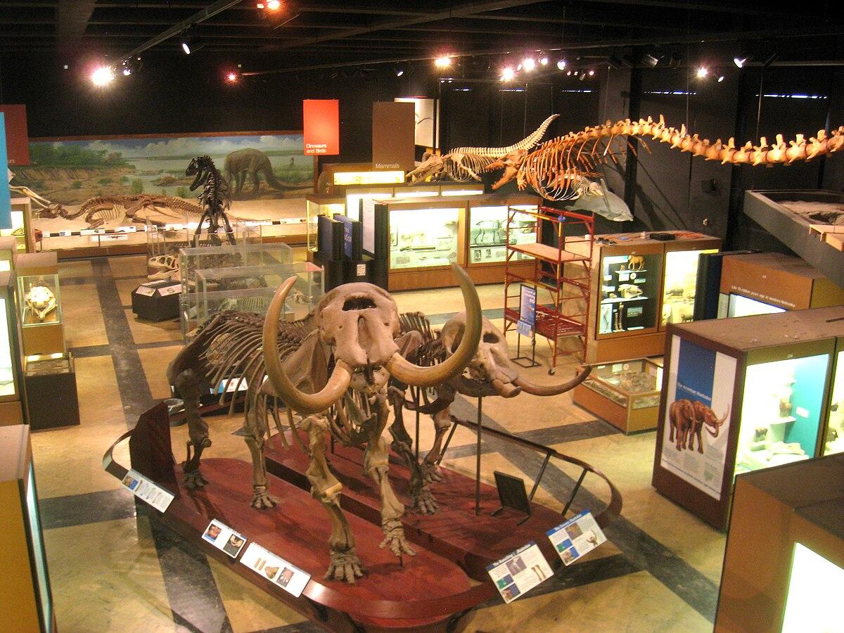 University of Michigan Museum of Natural History  Wikipedia