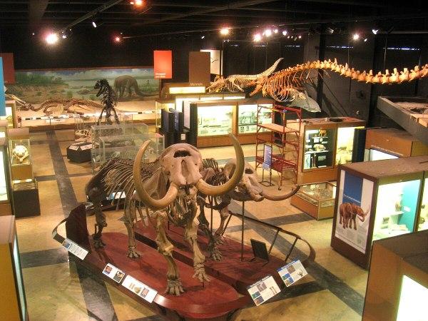 Natural History Museum Ann Arbor