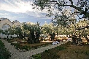 Gethsemane Garden (Mount of Olives) in Jerusalem