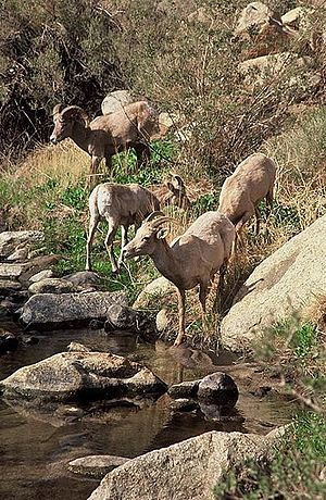 English: Taken at Anza-Borrego State Park, Cal...