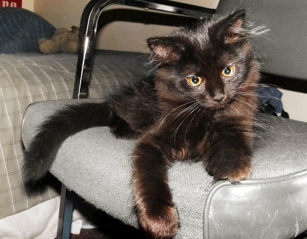 FileBlack cat on a chairjpg  Wikimedia Commons