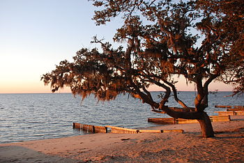 English: Trees and sunset at the beach in Coli...