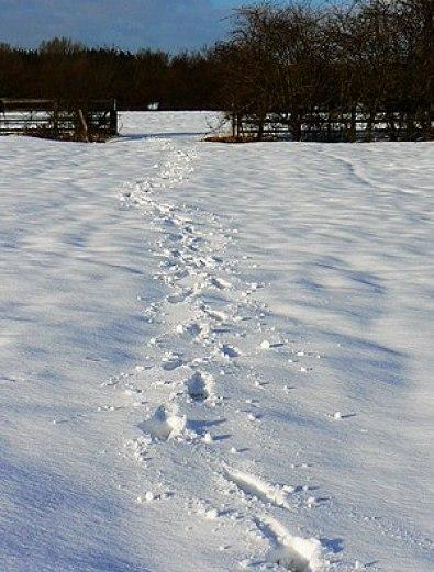 English: Footprints in the snow, near Moor Lea...