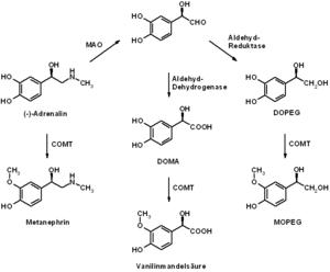 Adrenalin (Metabolisierung)
