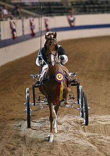Hackney pony  Wikipedia