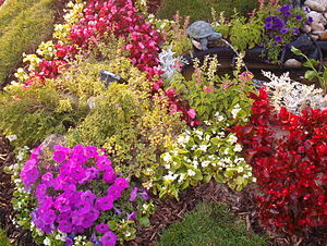 English: Flowers in Sibiu