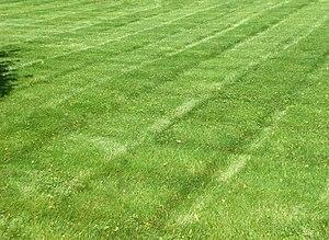 A Striped Lawn
