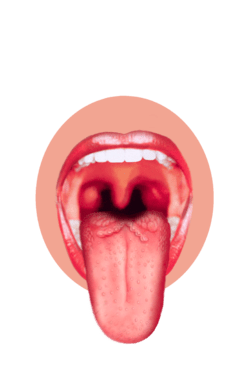 human taste buds diagram single gang light switch wiring sensory systems/gustatory system - wikibooks, open books for an world