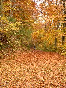 Falling Leaves Wallpaper Screensavers Abscisi 243 N Wikipedia A Enciclopedia Libre