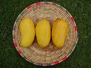 sindhri, famous mango variety from Pakistan an...