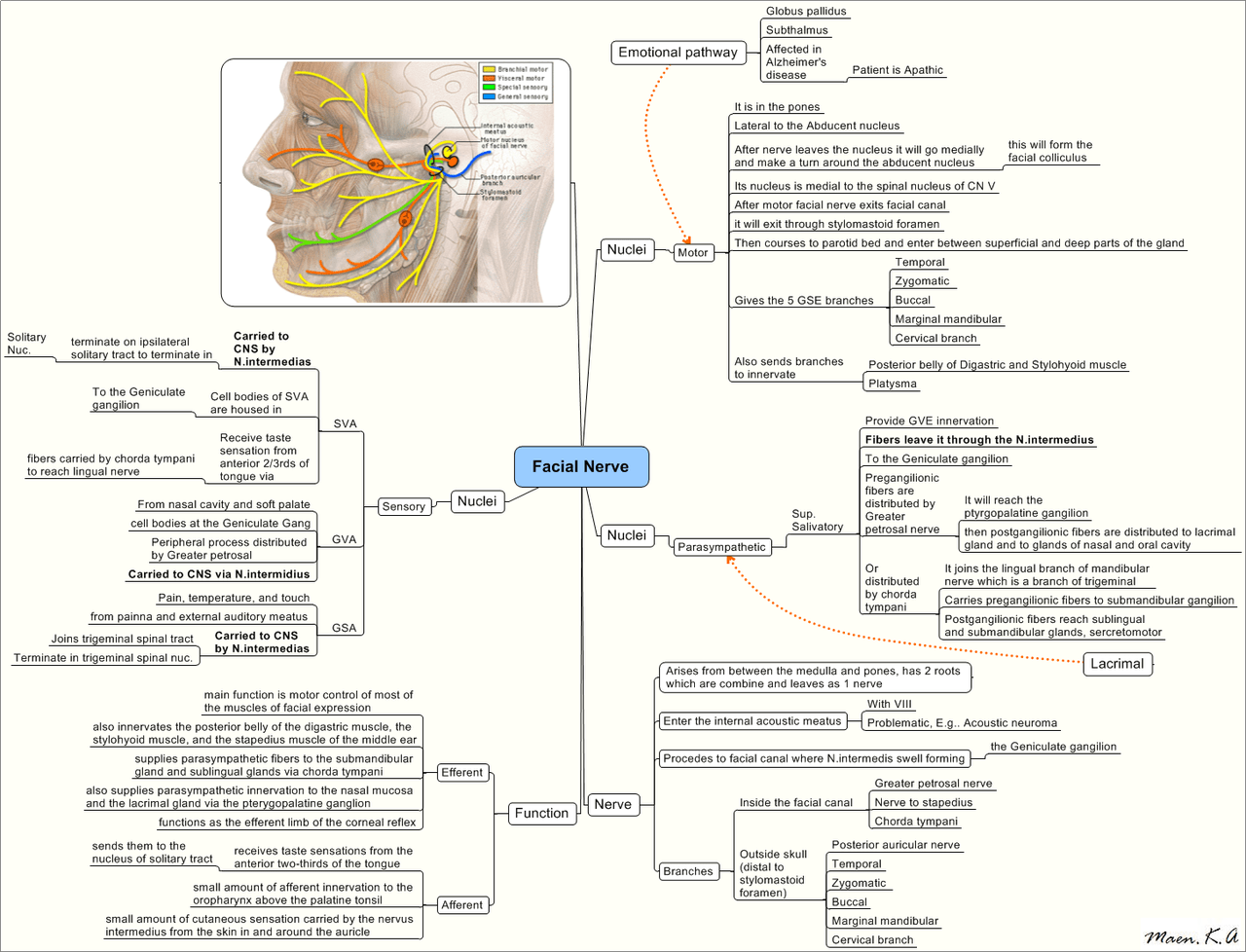 facial trigeminal nerve diagram alpine ktp 445 wiring shingles pathways related keywords