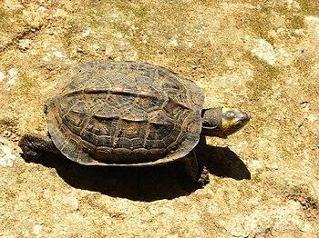 Tortoise 05